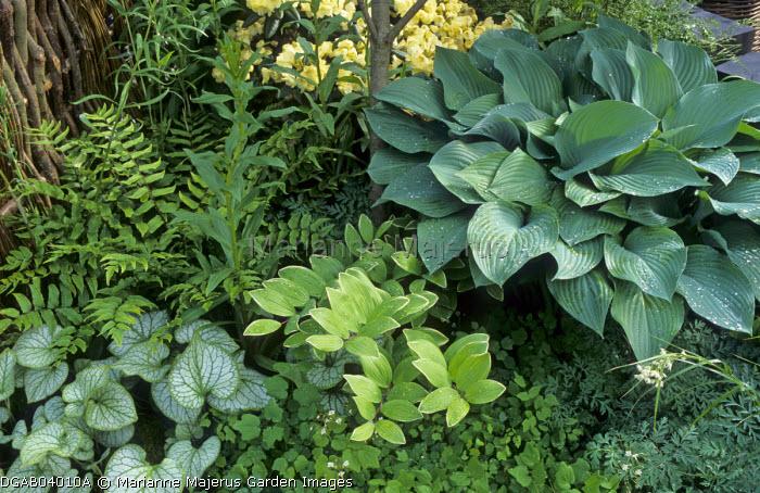 Marianne Majerus Garden Images