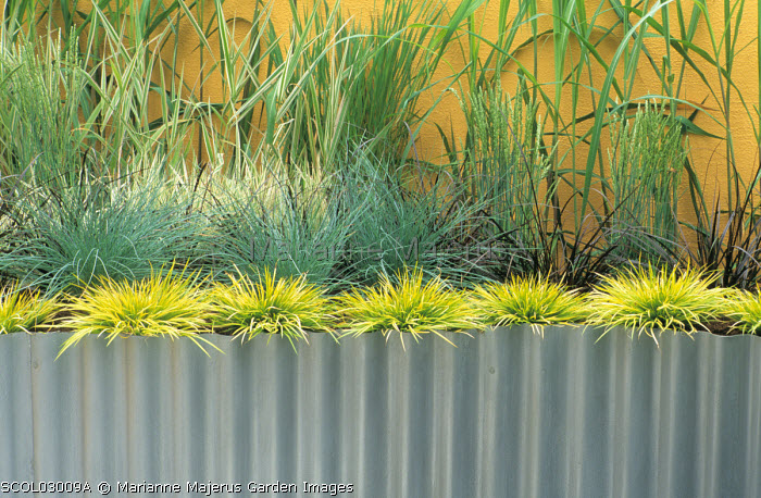 Corrugated iron raised bed, grasses