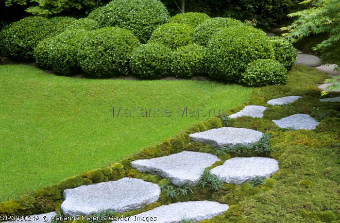Stepping stone path, cloud-pruned Buxus microphylla 'Faulkner', granite boulders