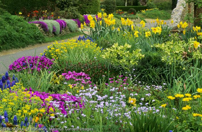 Muscari, aubretia, daffodils, Helleborus foetidus, muscari, forget-me-nots