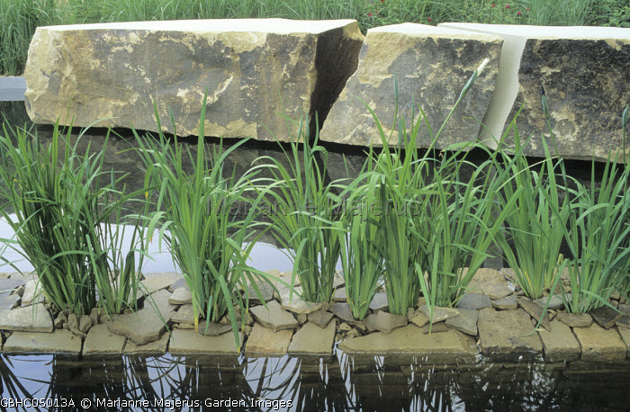 Pond, rocks, stone chippings, Iris ensata