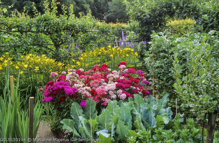 Vegetable garden, Sweet william, Hemerocallis flava, espaliered apple tree