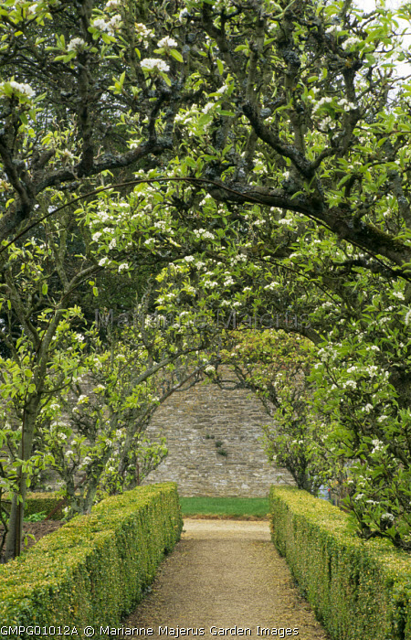 Pear tree tunnel