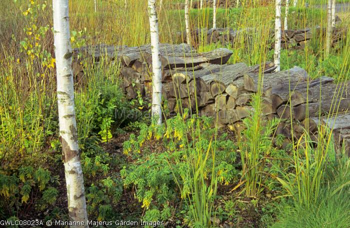 Log walls, birch trees