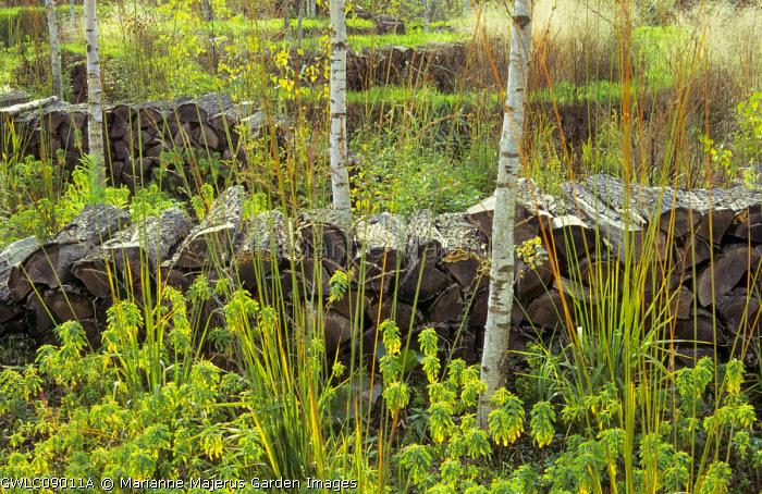 Log pile walls, birch trees