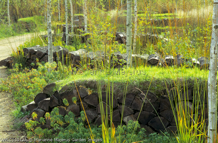 Turfed log walls, birch trees