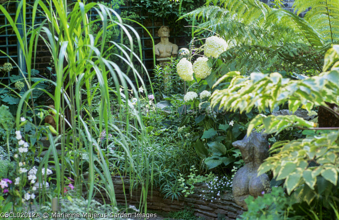 Miscanthus sacchariflorus, Aralia elata 'Aureovariegata', Hydrangea arborescens 'Annabelle'