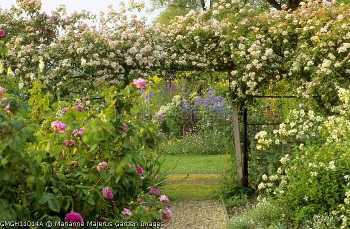 Rose Garden Rambling Rosa Wedding Day