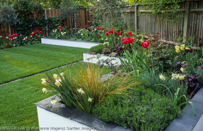 Raised beds, tulips