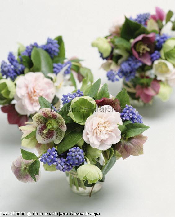 Posies of hellebore, muscari, camellia, cut flower arrangement