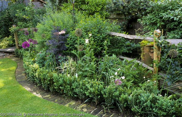 Rustic fence, curved border with brick and box edging, Sambucus 'Black Lace', Allium hollandicum 'Purple Sensation'