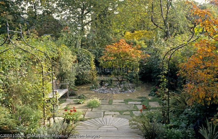 Acer japonicum 'Vitifolium' in town garden, decking and stone paving
