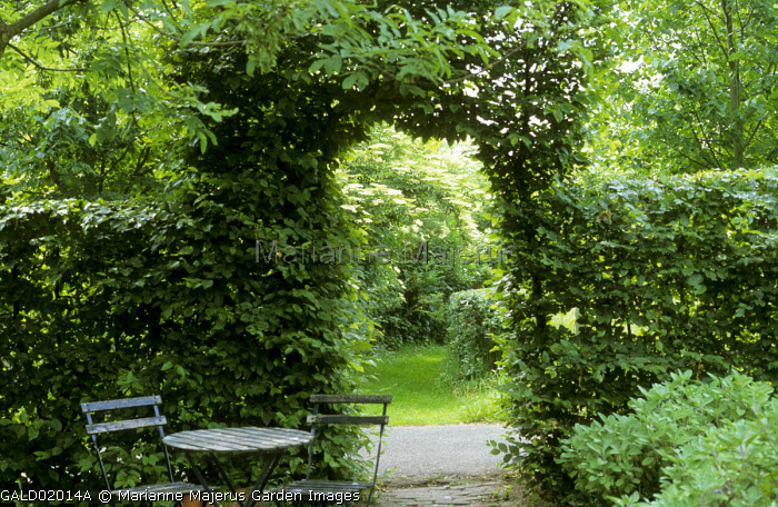Archway in hornbeam hedge