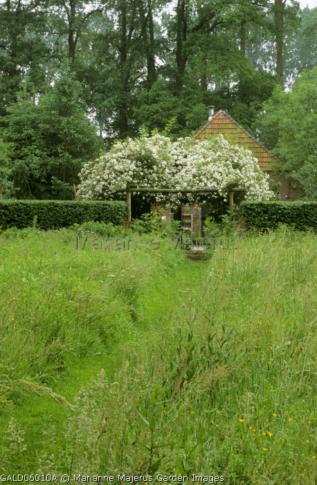 Mown grass path through long grass meadow to pergola with roses