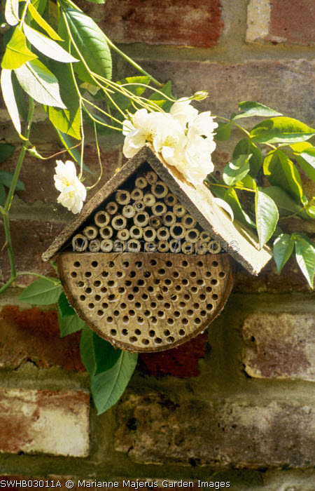 Bee box, insect 'hotel'