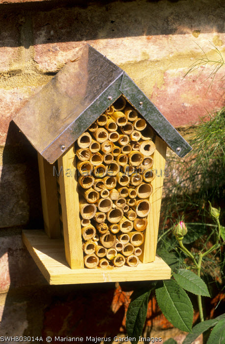 Bee box, insect hotel