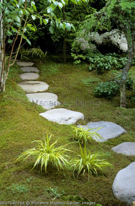 Stepping stone path, Hakonechloa macra 'Aurea', Betula jacquemontii, moss