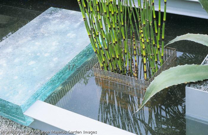 Glass bridge, pond