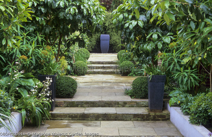 Sandstone paving, raised beds, Pseudopanax laetus, Euphorbia mellifera, Iris confusa, box balls, focal point