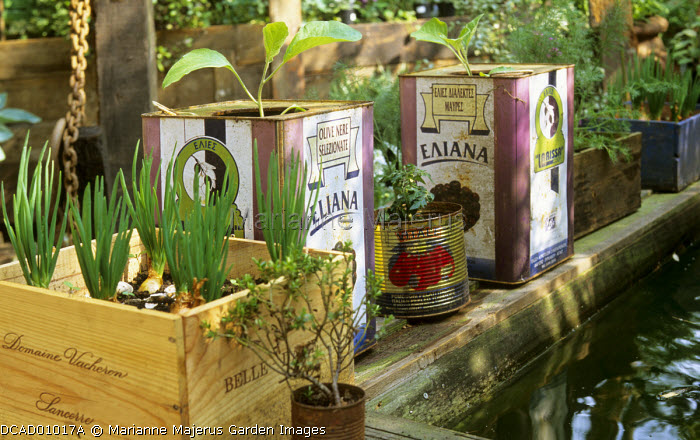 Shallots and aubergines in recycled wooden crate and olive jars