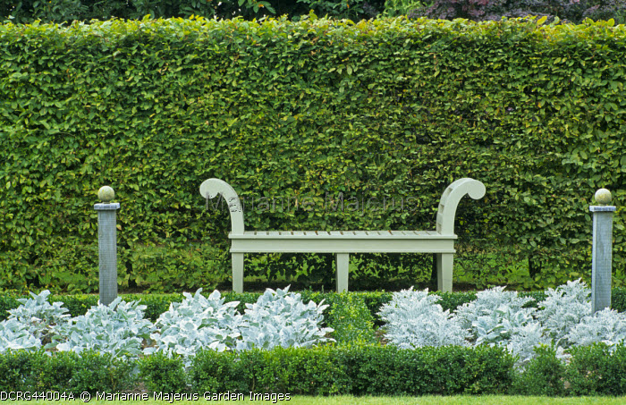 Hornbeam hedge, bench, box-edged bed with Senecio cineraria 'Silver Dust'