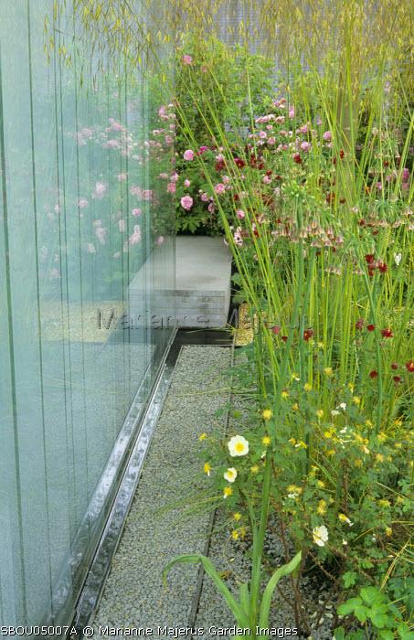 Glass screen, Stipa gigantea, Nectaroscordum siculum, roses, aquilegias