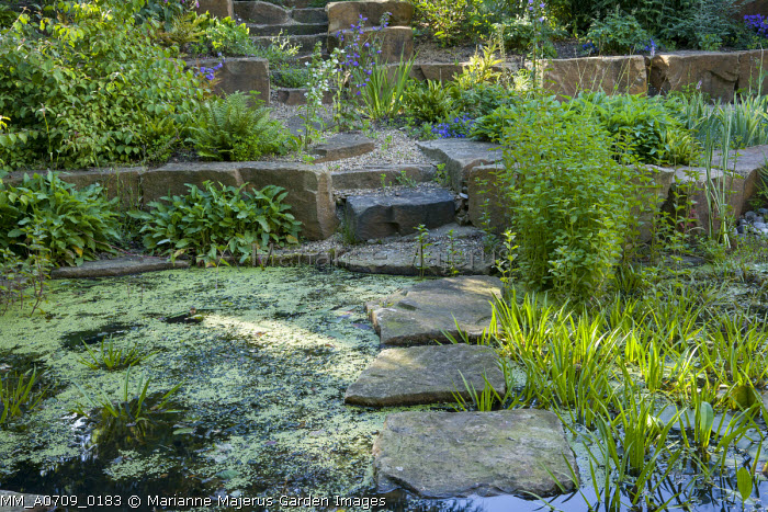 Stepping stones across pond, steps to rock garden