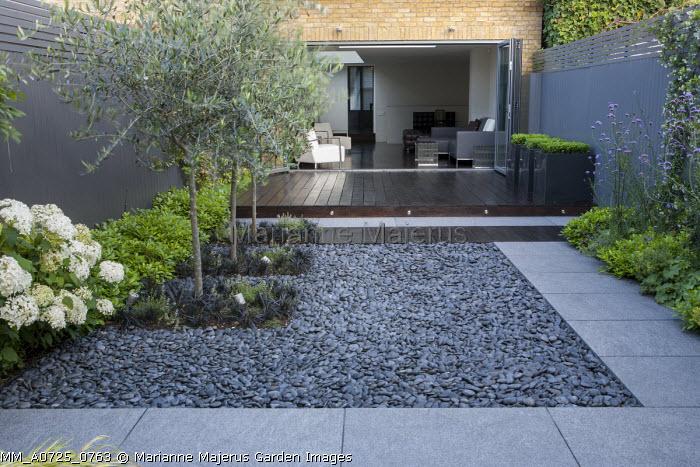 Ophiopogon planiscapus 'Nigrescens' around base of olive trees, black pebbles, stone paving, Pittosporum tobira 'Nanum', Hydrangea arborescens 'Annabelle', view to house, oak decking, grey painted fence