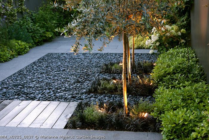 Uplit olive trees underplanted with Ophiopogon planiscapus 'Nigrescens', Pittosporum tobira 'Nanum', black pebbles