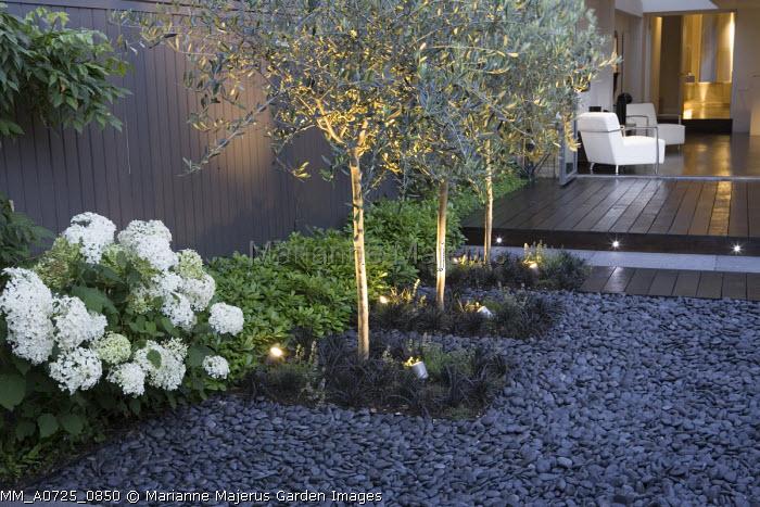 Olive trees underplanted with Ophiopogon planiscapus 'Nigrescens', Hydrangea arborescens 'Annabelle', Pittosporum tobira 'Nanum', grey painted fence, black pebbles
