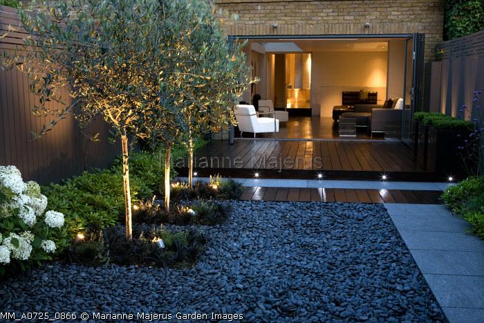 Uplit olive trees underplanted with Ophiopogon planiscapus 'Nigrescens', Hydrangea arborescens 'Annabelle', Pittosporum tobira 'Nanum', grey painted fence, black pebbles, view to house