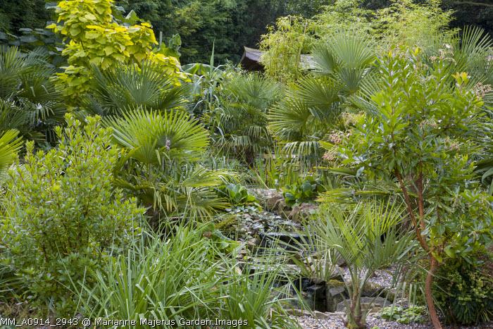 Stream, Arbutus x andrachnoides, catalpa, Trachycarpus fortunei