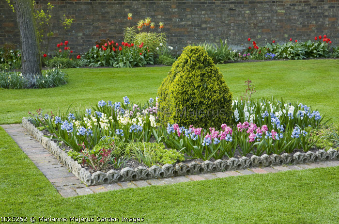 Hyacinth collection, Victorian edging, clipped shrub