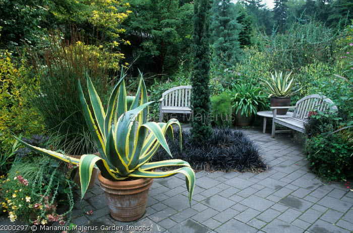 Terrace with 'Lawn' of Ophiopogon planiscapus 'Nigrescens', benchs