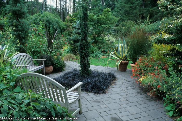 Terrace with 'Lawn' of Ophiopogon planiscapus 'Nigrescens'