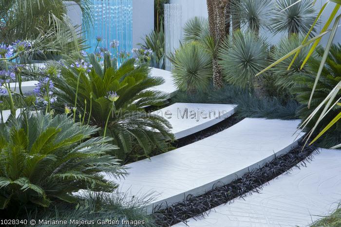 White stone steps, exotic planting, Ophiopogon planiscapus 'Nigrescens'