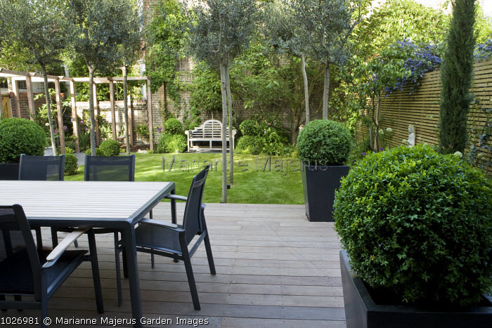 Table and chairs on ipe decking, olive trees, box balls in large black polystone containers