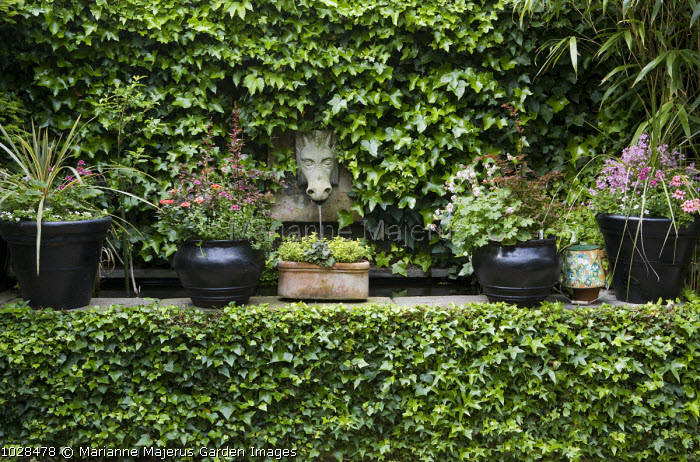 Horse head fountain, ivy-covered wall, black containers
