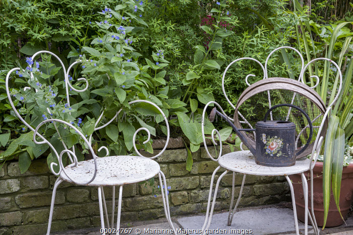 White metal chairs, watering can, brunnera