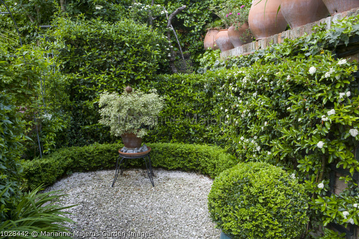 Green 'room', pyracantha hedge, clipped box hedge and ball, pittosporum in pot on plant stand