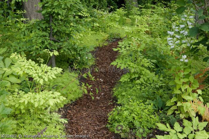 Path through woodland, bark chippings