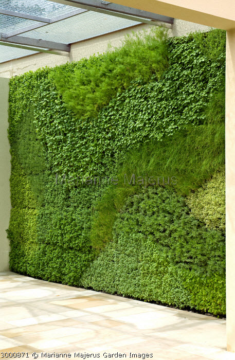 Living wall planted with herbs