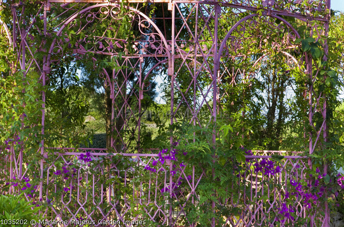 Indian wrought-iron pavilion, bougainvillea