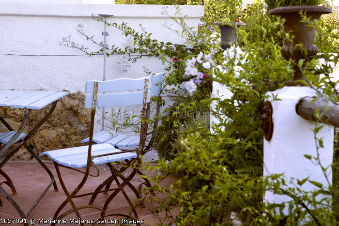 Painted blue chairs, urns, Solanum laxum