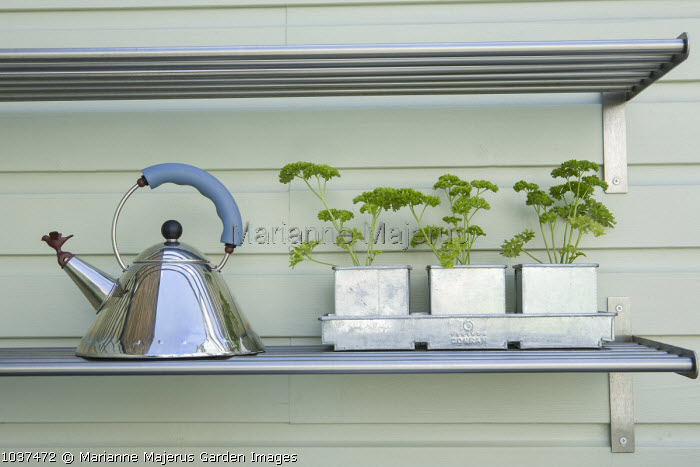 Parsley in containers, kettle on shelf in outdoor kitchen