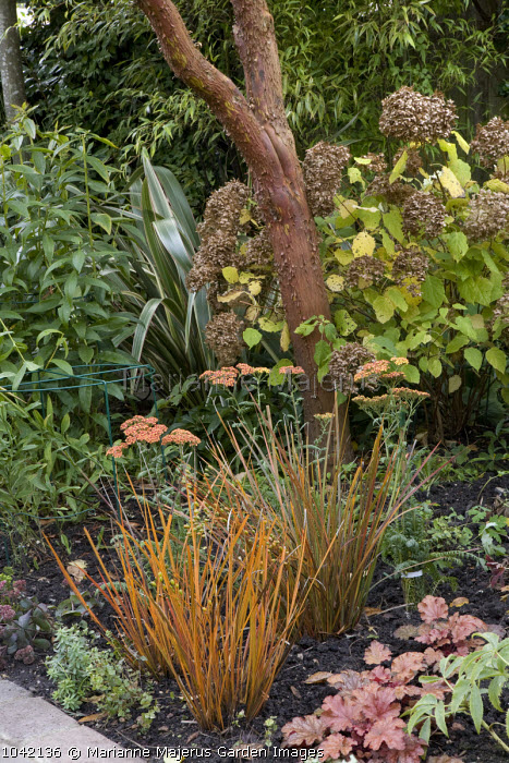 Arbutus x andrachnoides, Heuchera 'Georgia Peach', Libertia ixioides 'Tricolor', Achillea 'Terracotta', Hydrangea arborescens 'Annabelle' seedheads
