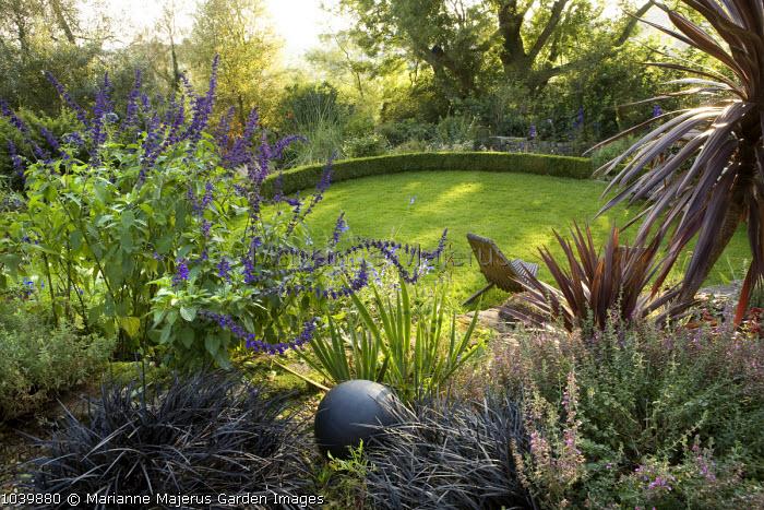 View over gravel border to circular lawn, low clipped box edging, Ophiopogon planiscapus 'Nigrescens', Salvia 'Indigo Spires', Weeping ash