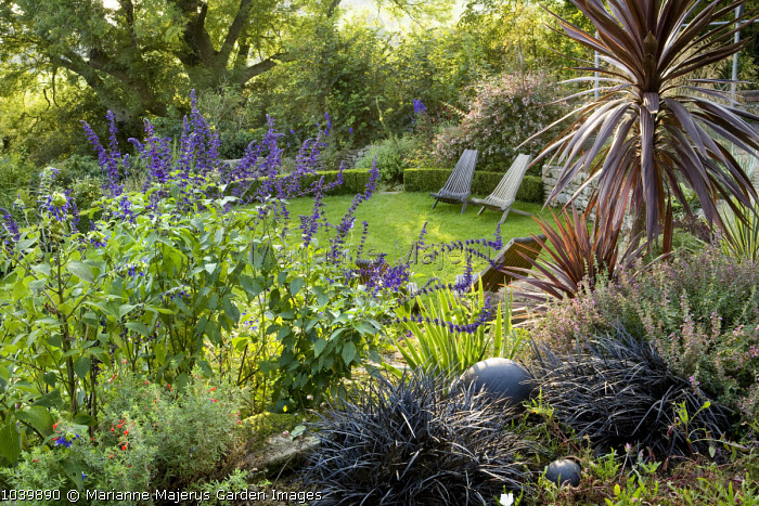 View across gravel border to recliners on circular lawn, Salvia 'Indigo Spires', Ophiopogon planiscapus 'Nigrescens'