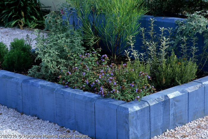 Raised beds using blue stained timber