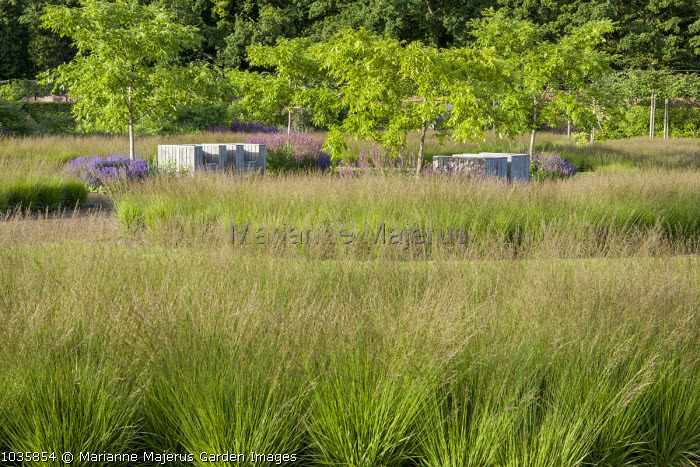 Meadow of Molinia caerulea, chairs by Piet Hein Eek, Phellodendron chinense